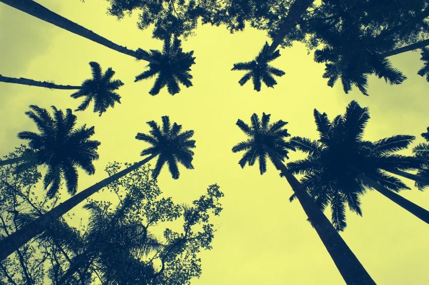 Brazilie klimaat - foto:  Huguys (Flickr)